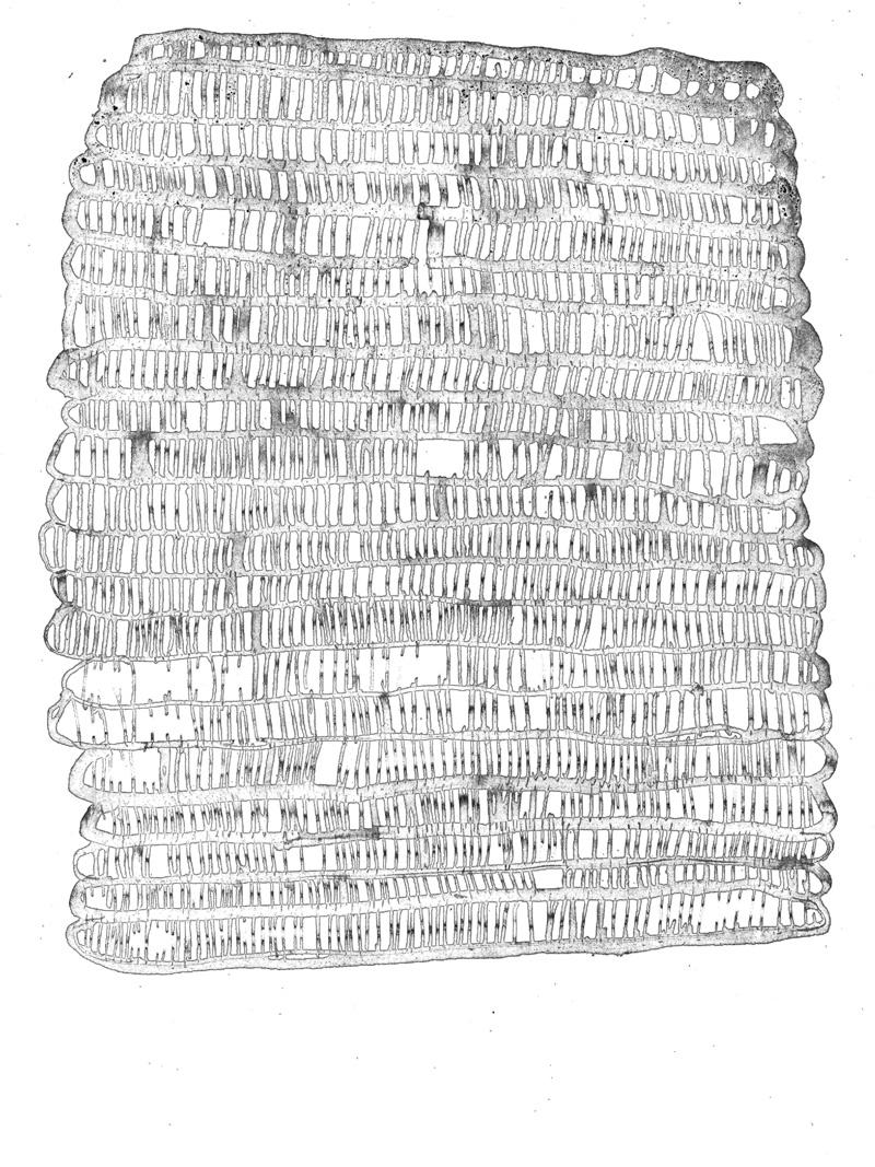 ohne Titel_12 | 2018 | 42 x 30 cm | Tusche auf Papier